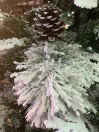 Detaliu brad nins 270 cm