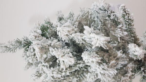 Detaliu ramura brad nins